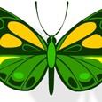 butterflies-vignette